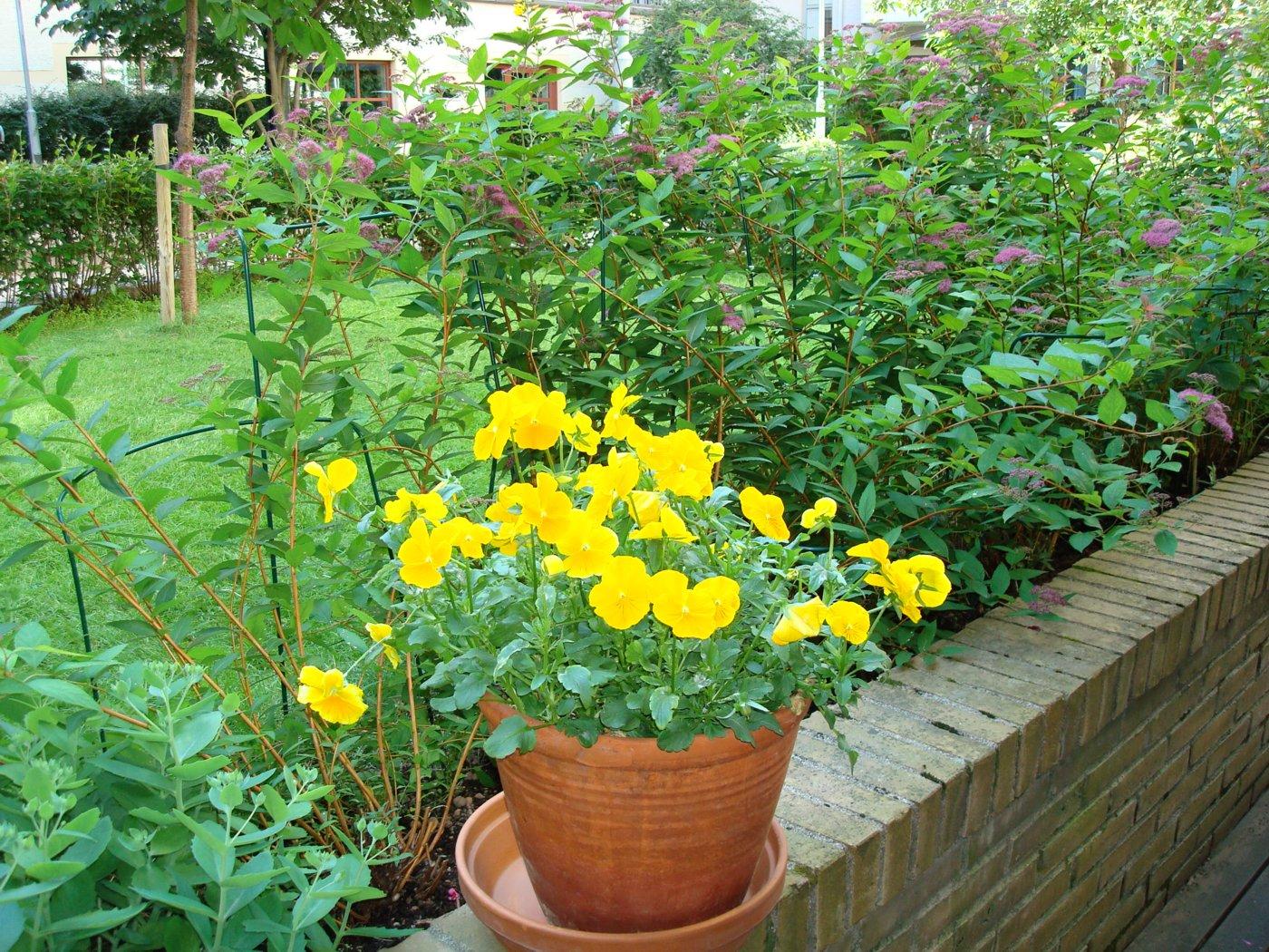 blommor den 3 juli 2007
